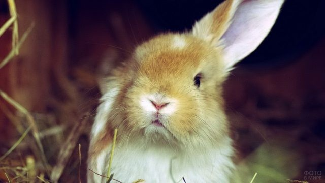 Крольчонок задрал одно ухо вверх