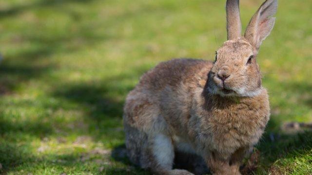 Кролик ходит по траве