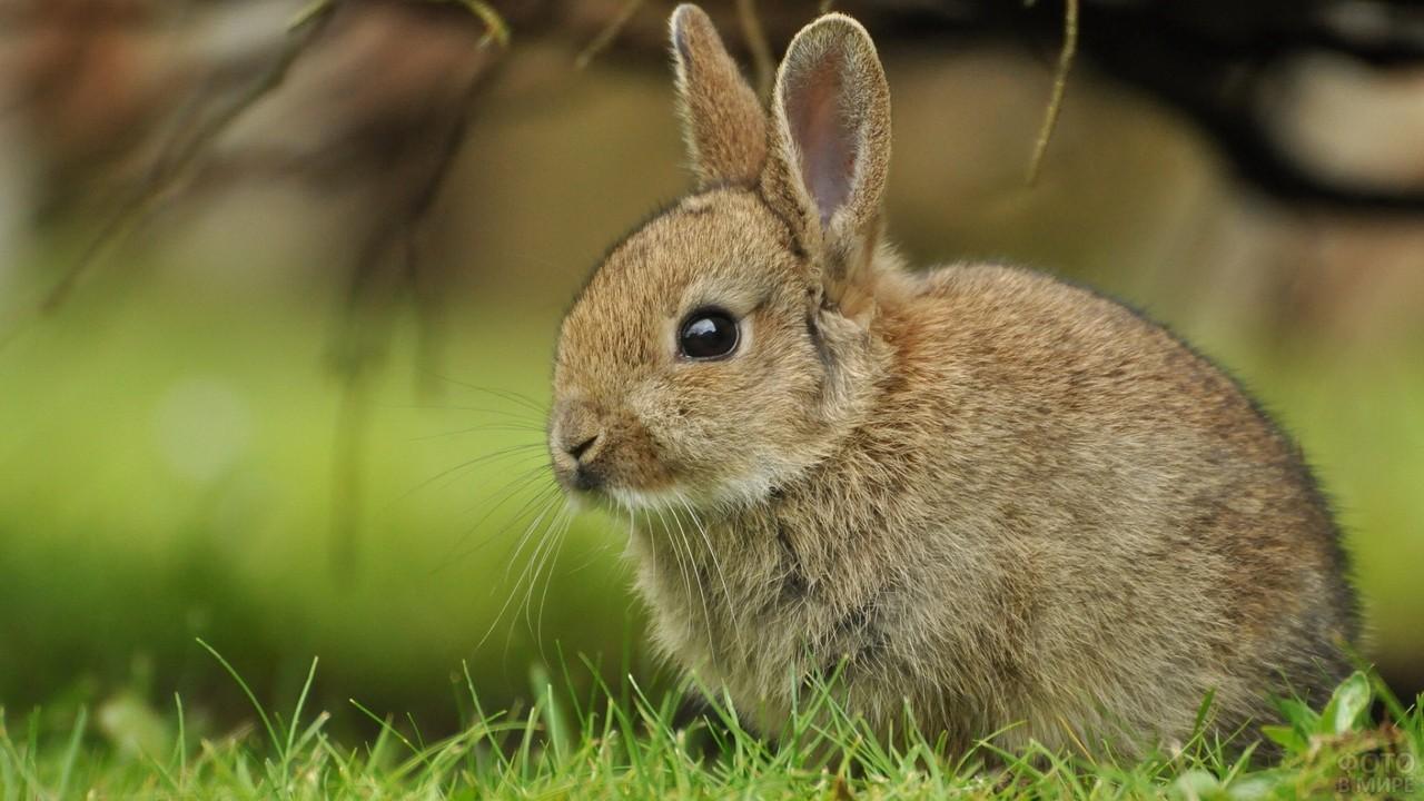 Кролик сидит на зелёной траве