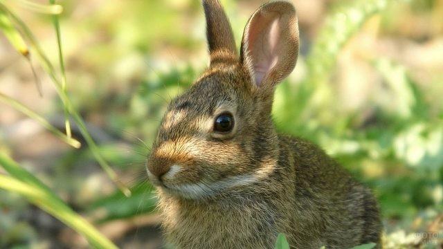 Кролик смотрит одним глазом