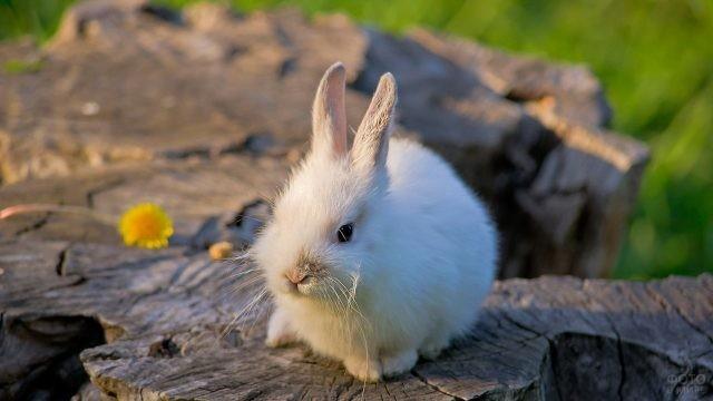 Маленький белый кролик сидит на пеньке