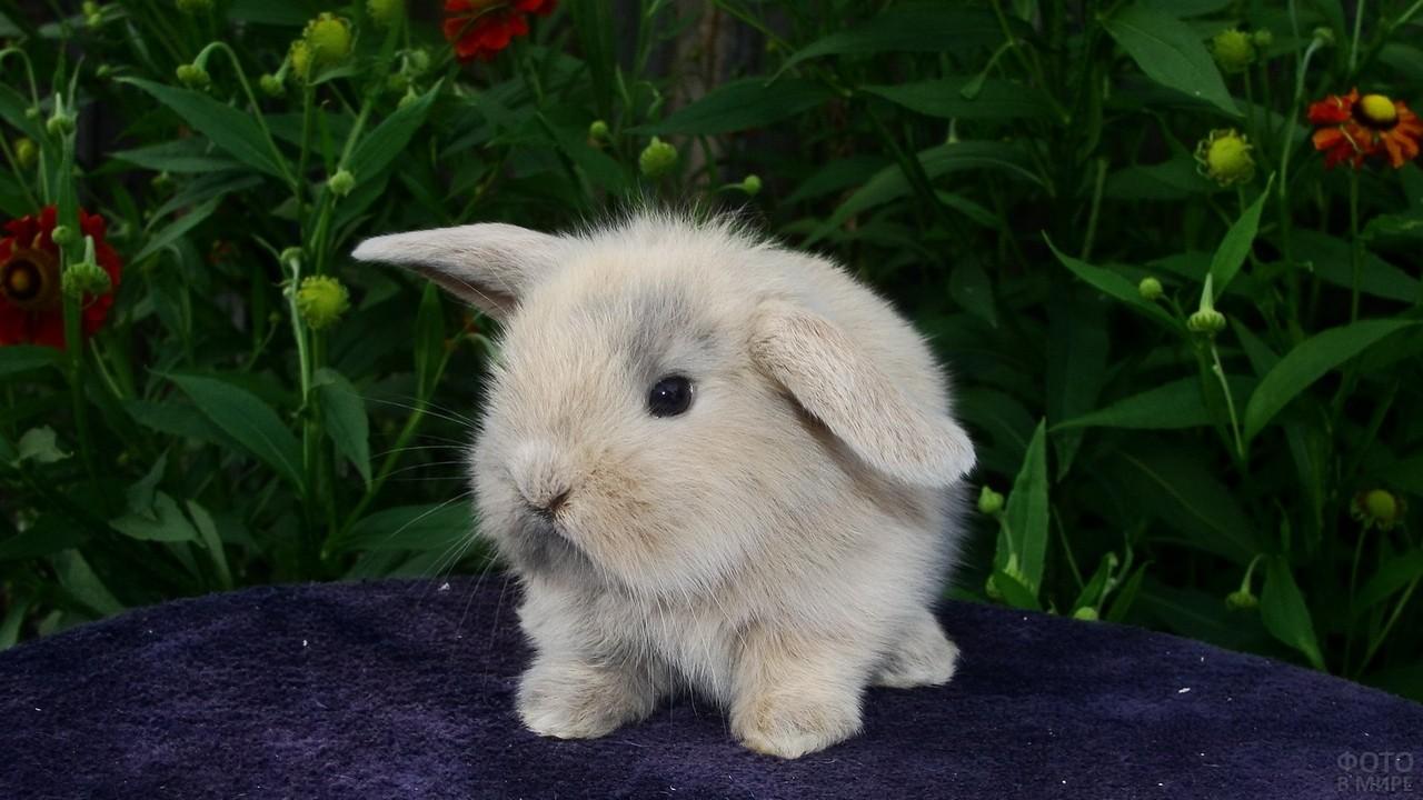 Малыш крольчонок сидит на фоне зелени
