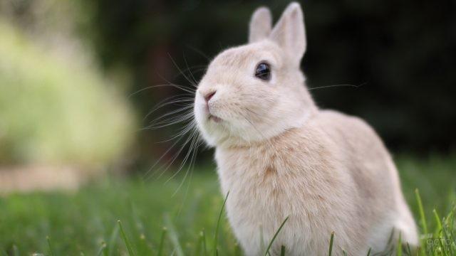 Малыш кролик сидит в траве