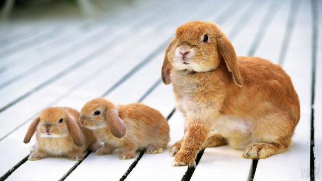 Мама крольчиха с крольчатами