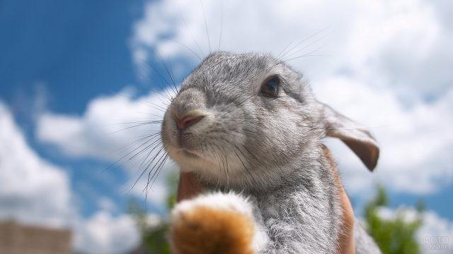 Серый кролик на фоне облаков