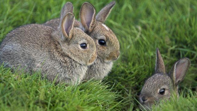 Три кролика сидят в траве