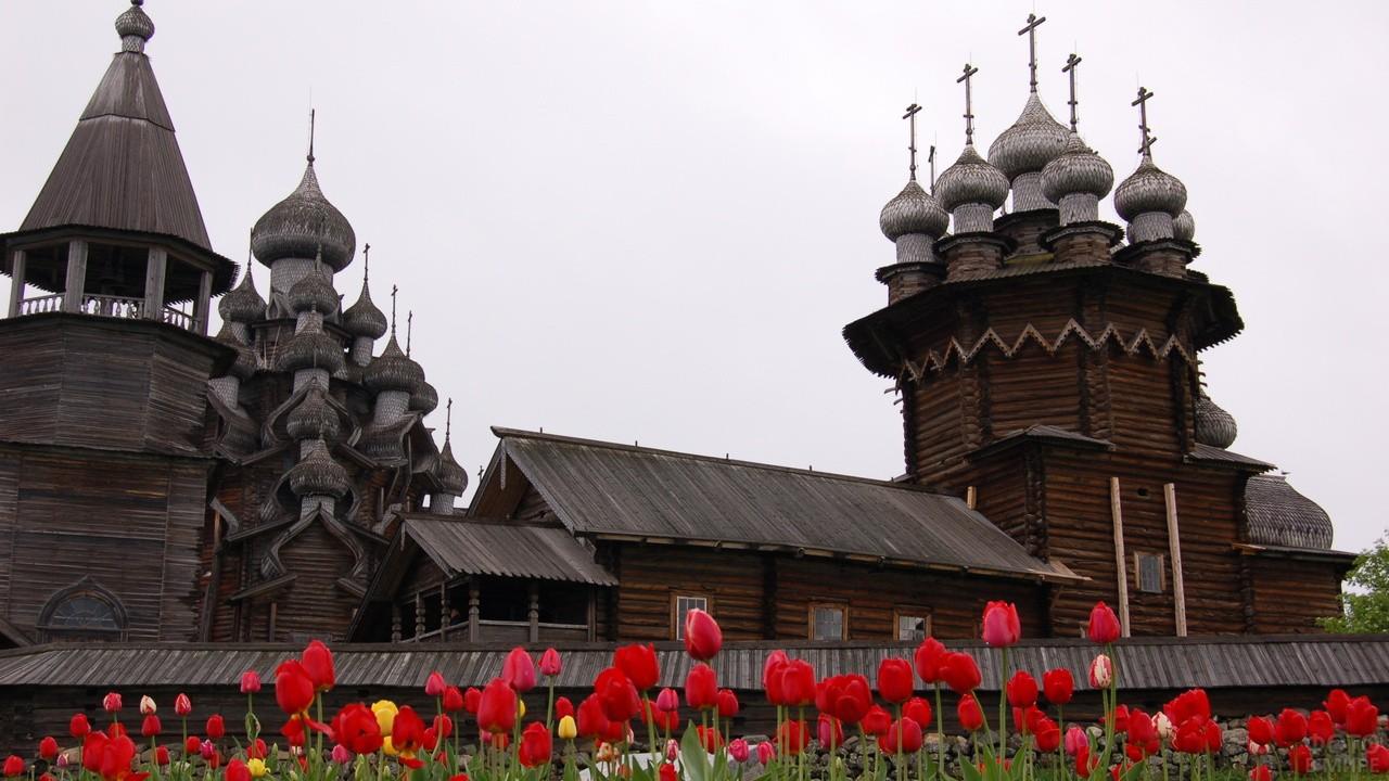 Красные тюльпаны у деревянной церкви
