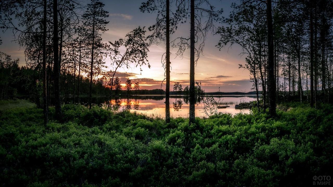 Закат над лесным озером