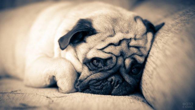 Дремлющий пёс на диване