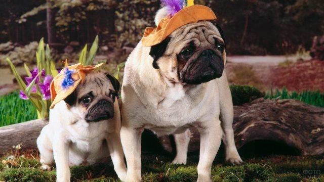 Две собаки в шляпах сидят на мху