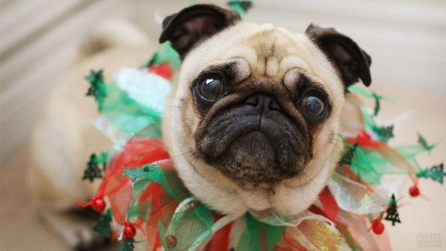 Смешная собака в карнавальном ошейнике