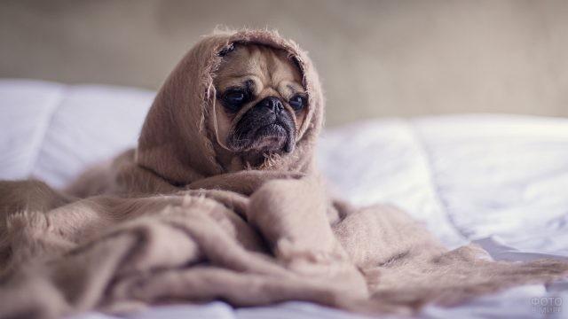 Замотанная в розовое покрывало собака на одеяле
