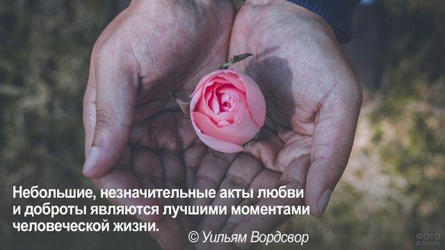 Маленькие добрые дела - цветок в ладонях