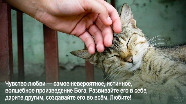 Творение Бога - человек гладит кота