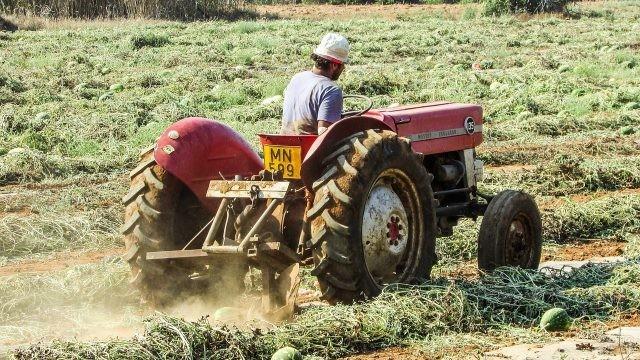 Мужчина на тракторе на арбузном поле