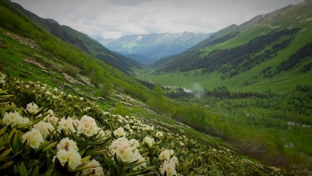 Белые цветы на склоне холмов