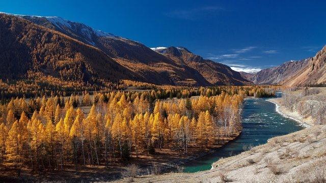 Осенние деревья вдоль реки горного Алтая