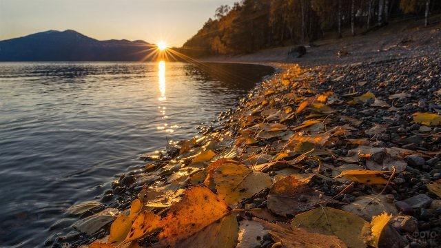 Осенние листья на берегу Телецкого озера