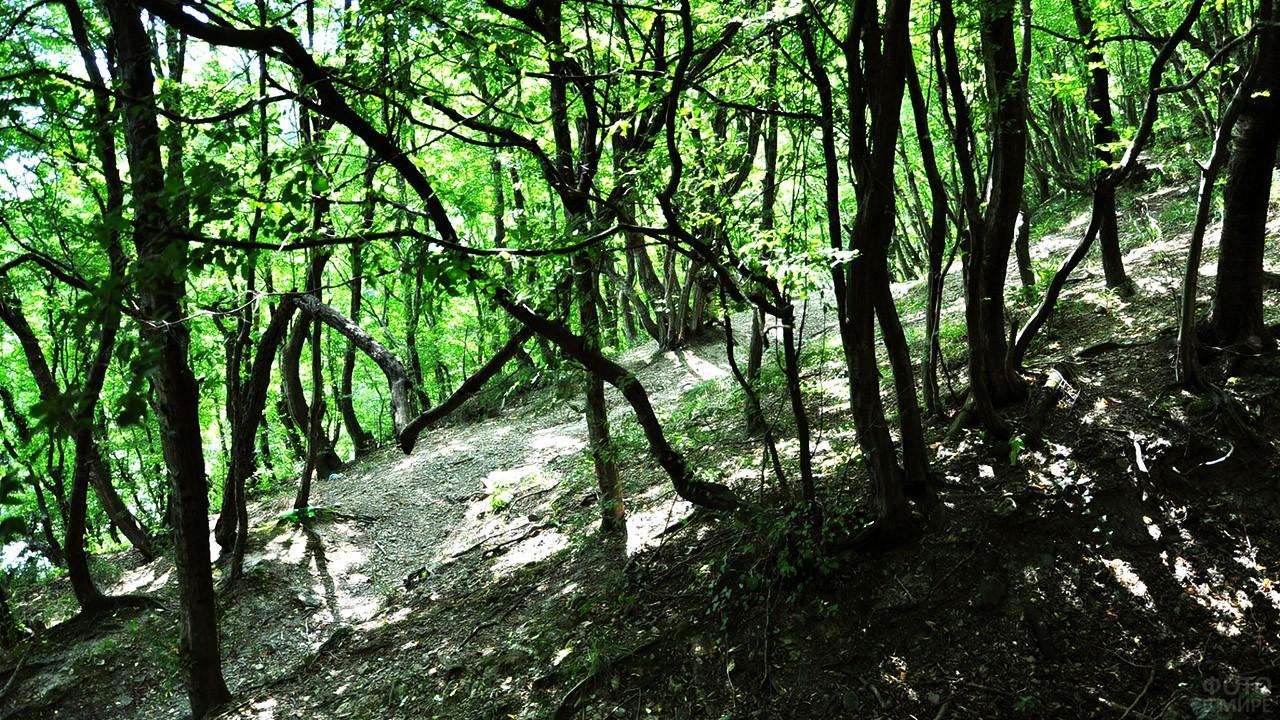 Тенистая тропа в лесопарке Кадош