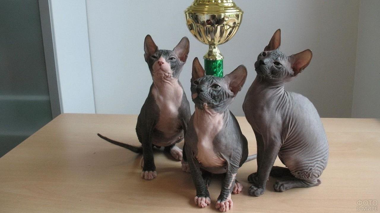 Победители кошачьей выставки с кубком