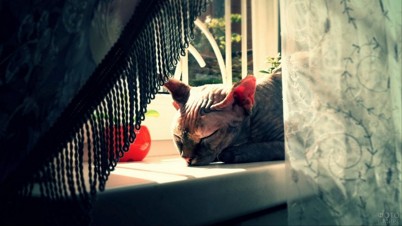 Спящая кошка на подоконнике за шторкой
