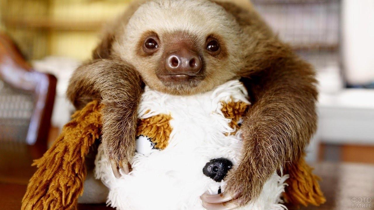 Маленький ленивец лежит на мягкой игрушке
