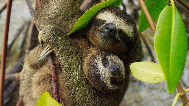 Мама с малышом в обнимку