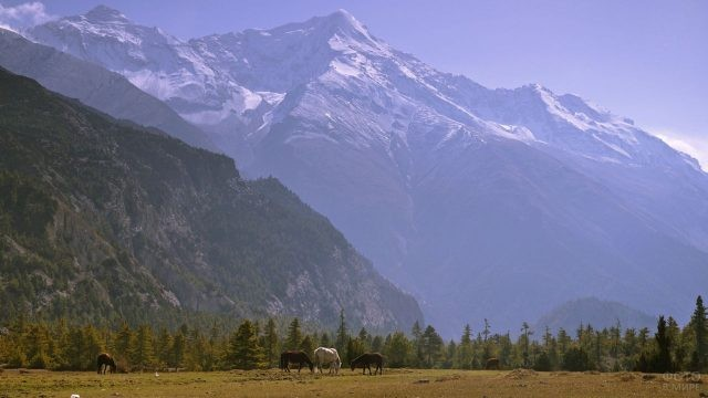 Дикие лошади на пастбище на фоне величественных гор
