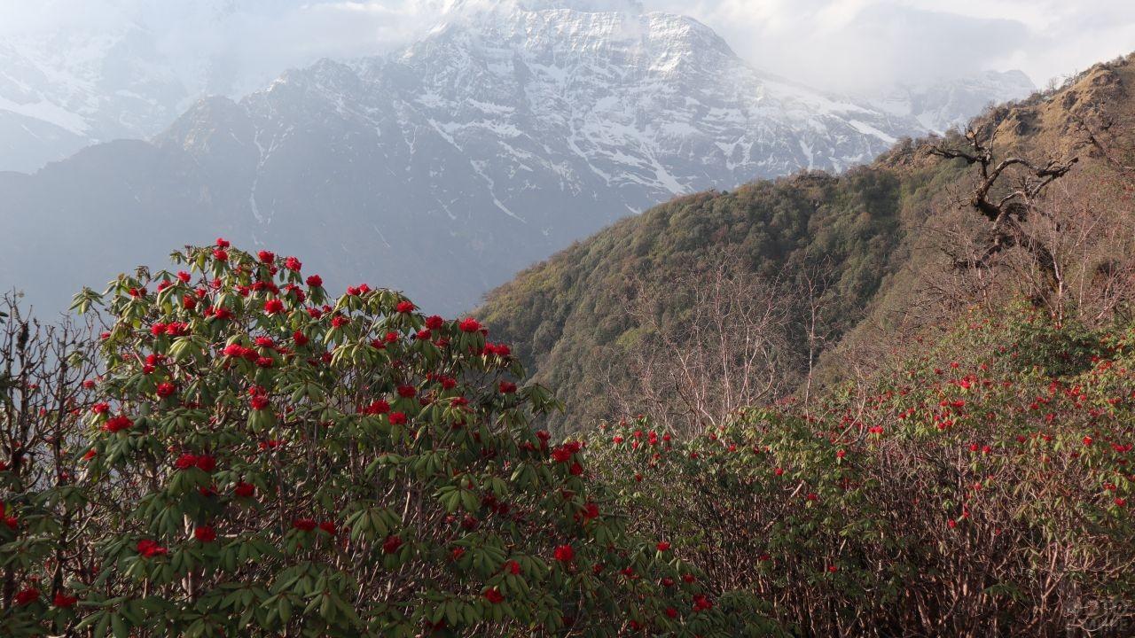 Мелкие цветы в высокогорьях Гималаев