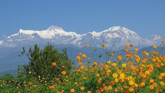Оранжевые цветки на вершине горы
