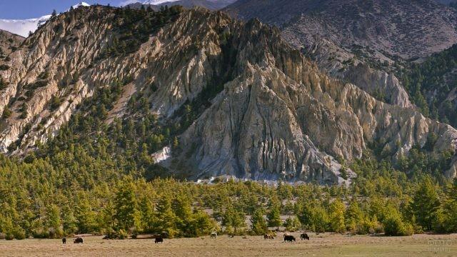 Животные пасутся в долине вблизи гор