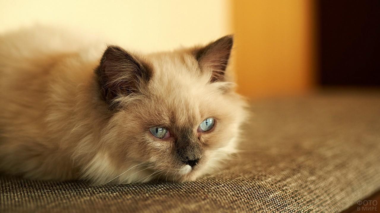 Дремлющий котёнок на диване