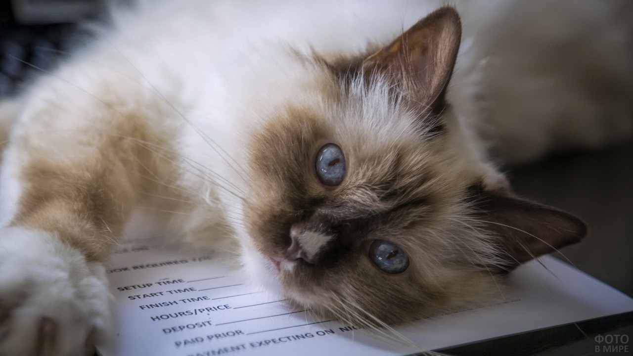 Кошка лежит на книге