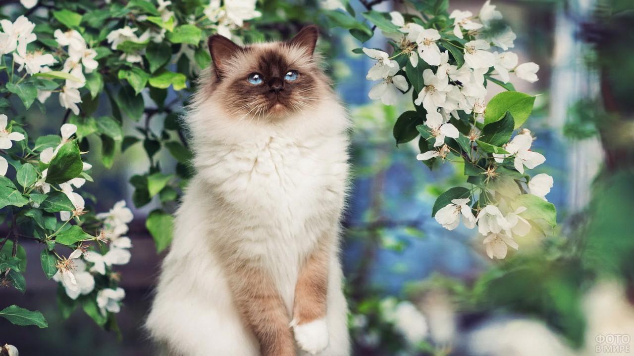Кошка привстала на фоне цветущего дерева