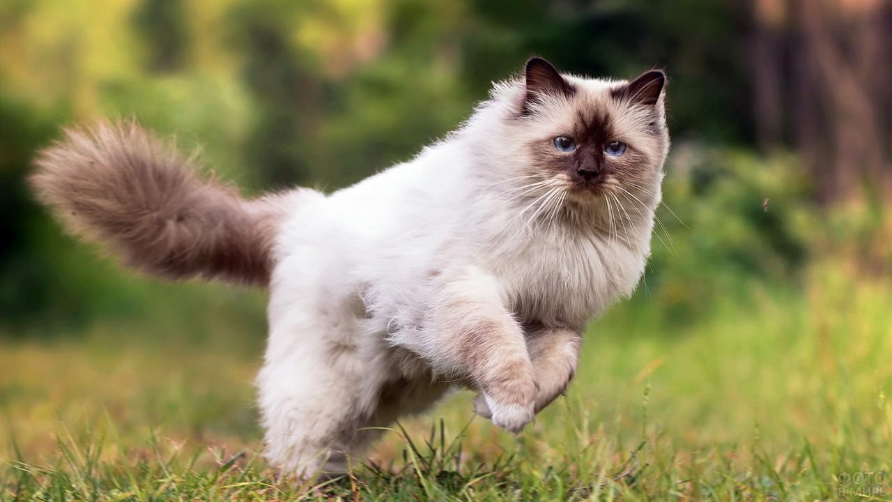Кот в прыжке на газоне