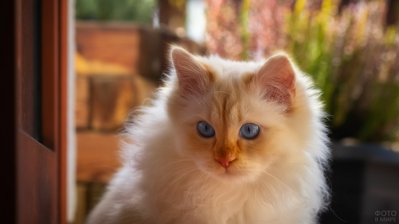 Котёнок на фоне открытой двери