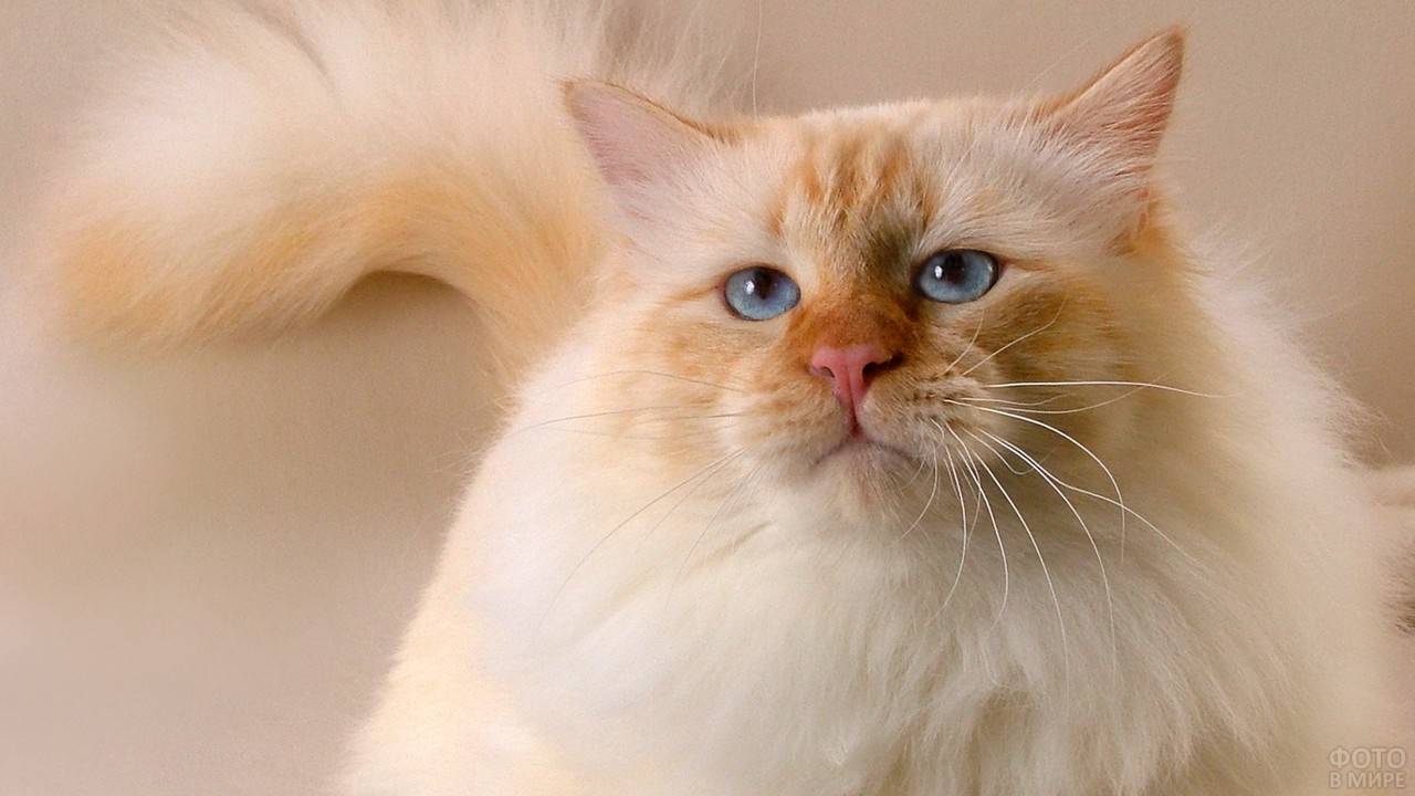 Морда недовольного кота