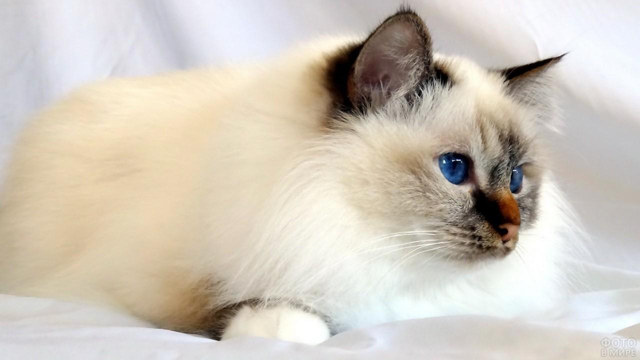 Подросший котёнок смотрит в сторону