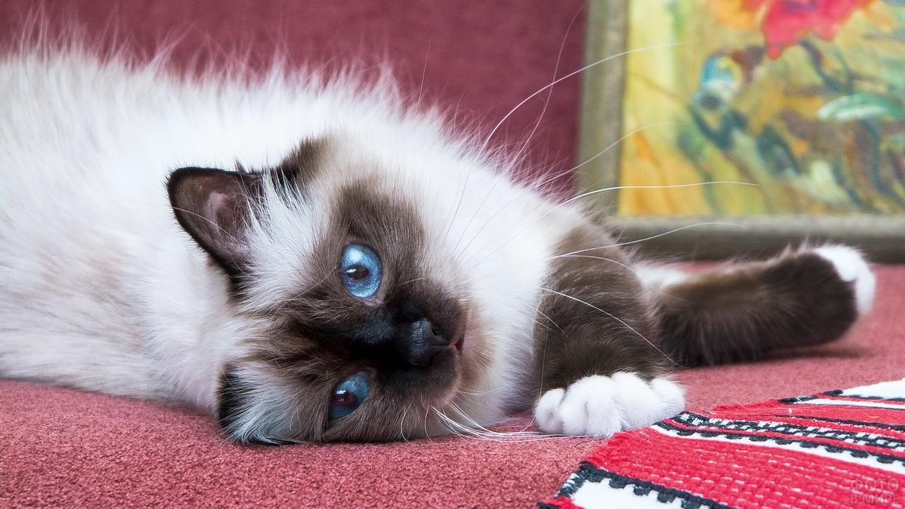Развалившаяся кошка на бордовом диване