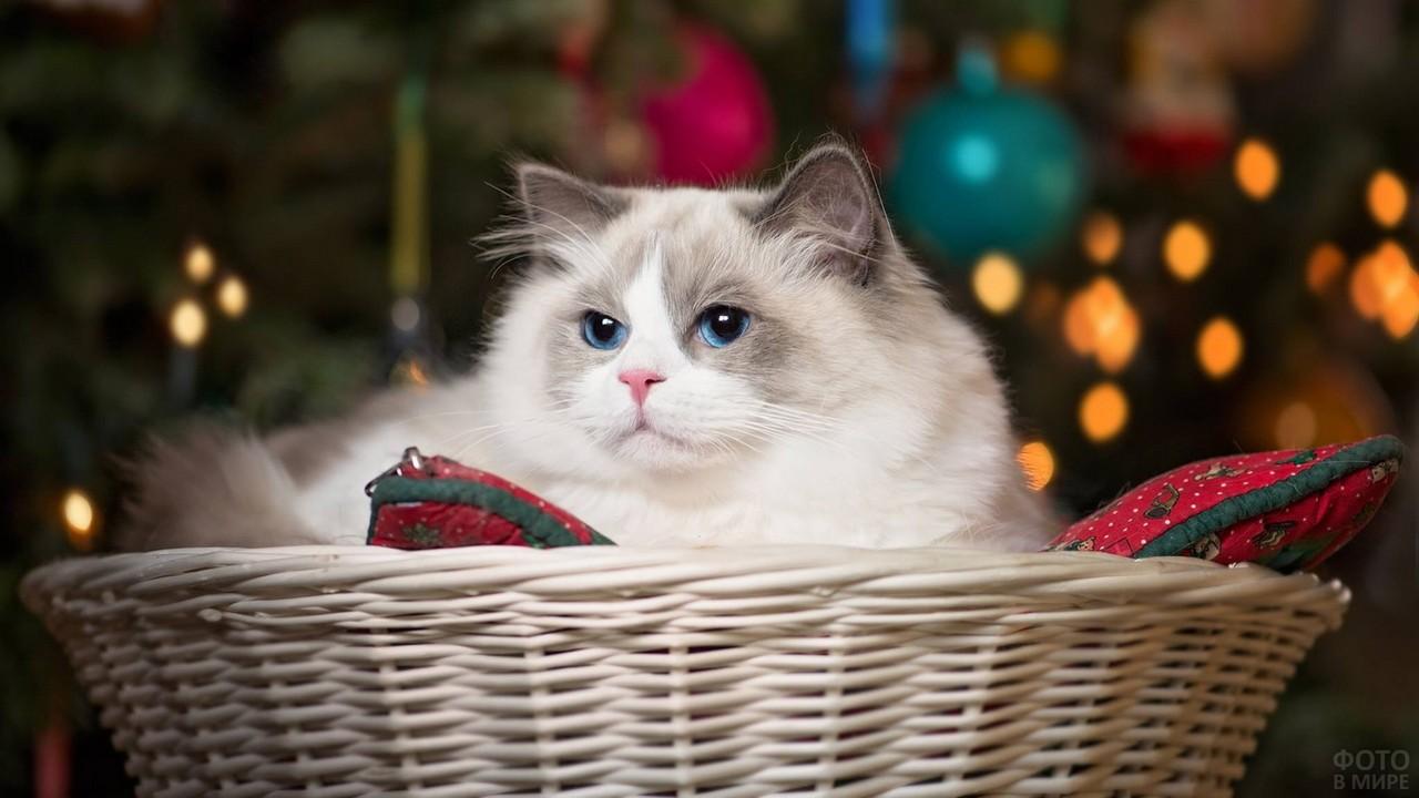 Серьёзный кот в корзине с подушками
