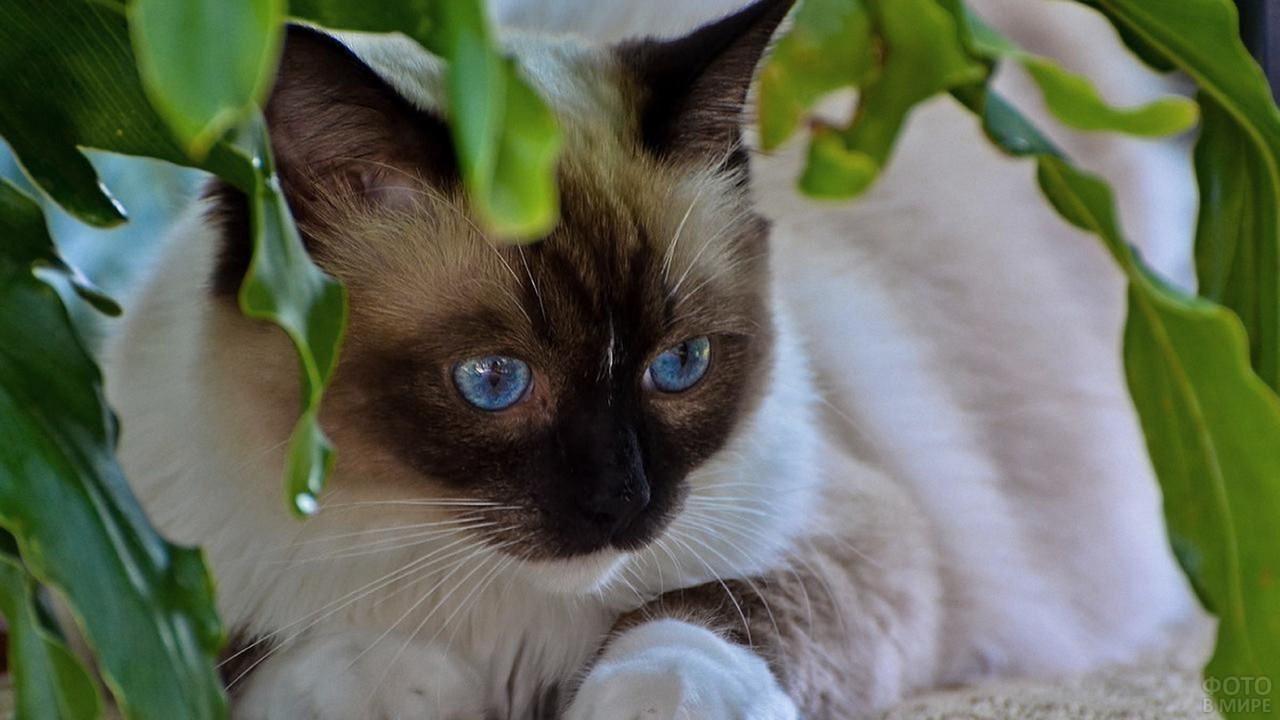 Спрятавшаяся кошка в зелени