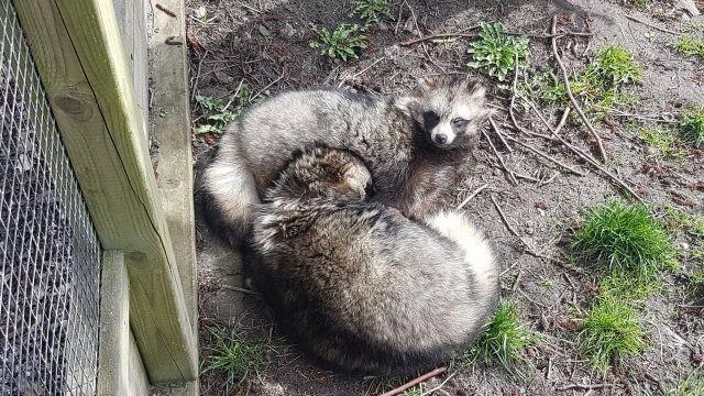 Спящие животные на земле