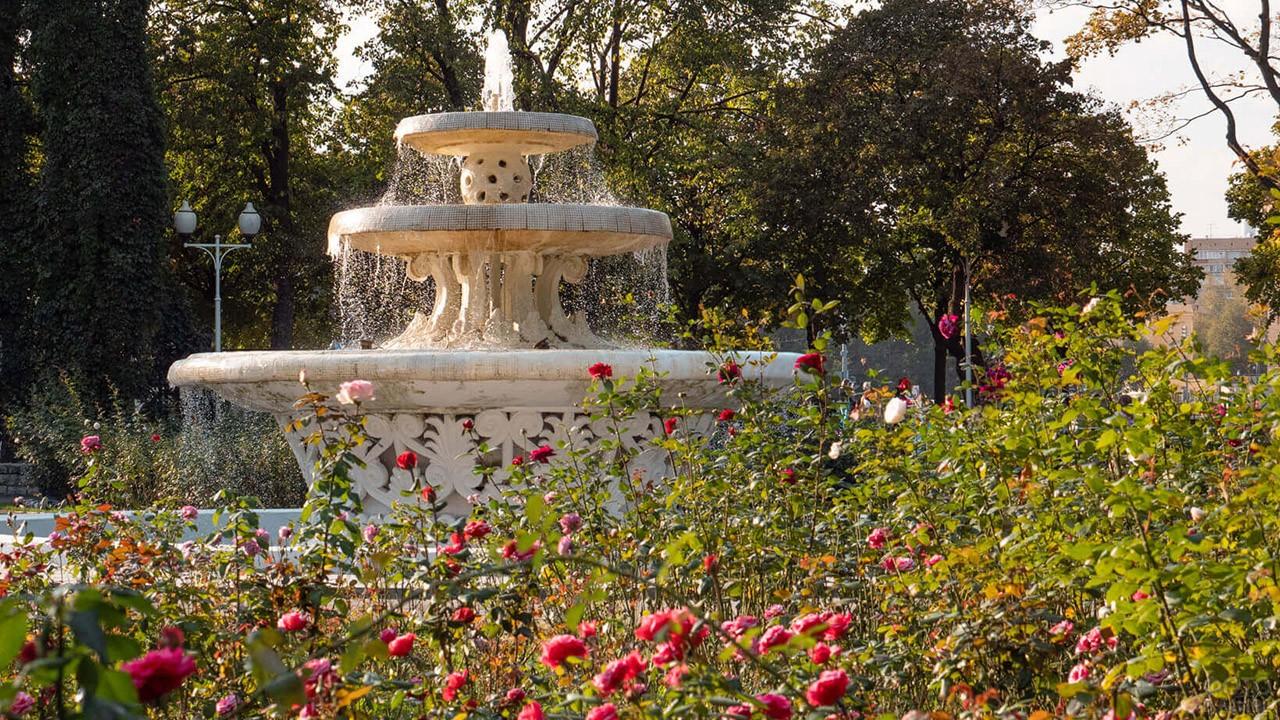 Фонтан в цветущем Розарии