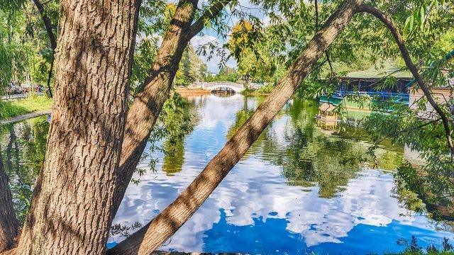 Ива у летнего пруда