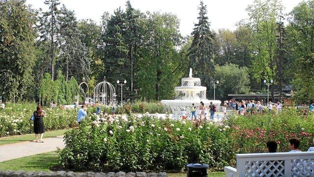 Розарий в Парке имени Горького