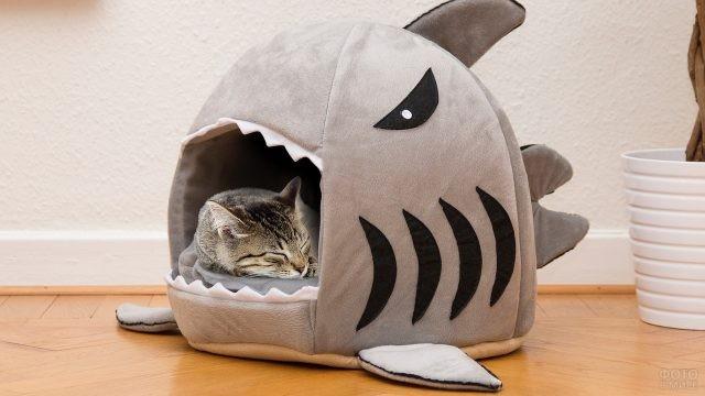 Кошачий дом в виде акулы