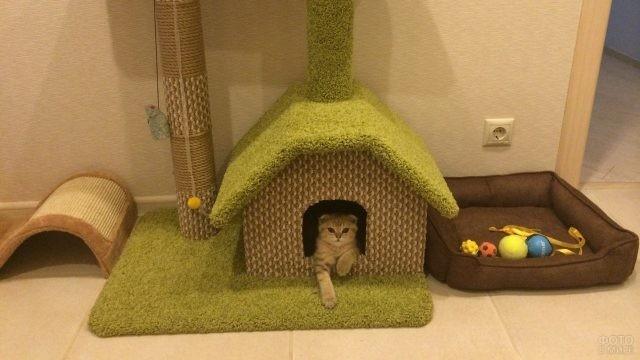 Кошачья зона для проживания и игр