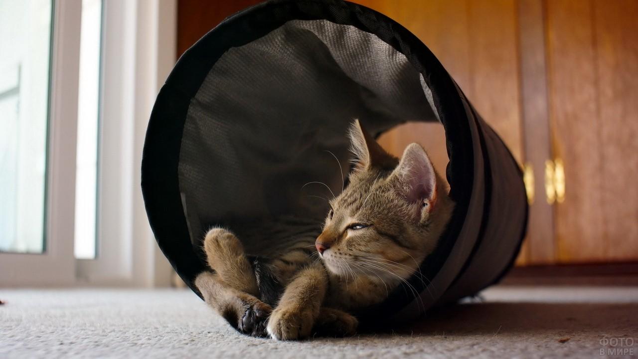 Кошка спит в домике
