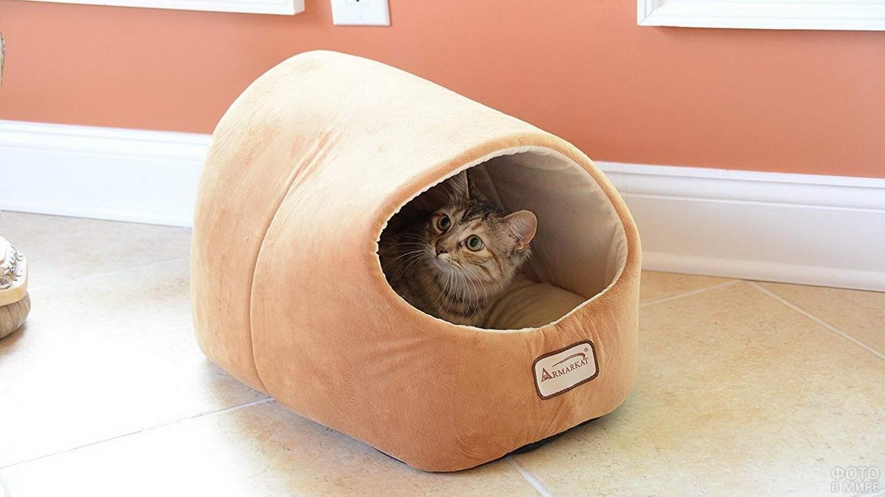 Кошка в светлом домике на полу