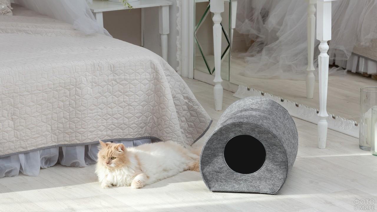 Кошка возле домика в комнате